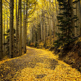 A Stroll Among the Golden Aspens  by Saija  Lehtonen