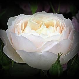 Richard Stubbs - A Stunning White Beauty