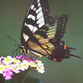 A Swallowtail by Sandra Clark
