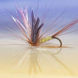 A Trout Fly (greenwell's Glory)
