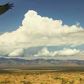 A Vulture and Lightning, Chiricahua Mountains, Arizona by Derrick Neill