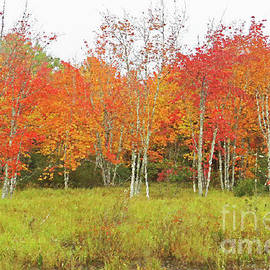 A Wall of Fall by Maili Page