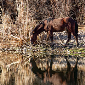 A Wild Reflection by Cathy Franklin