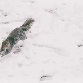 A Winters Jump - Martin Newman
