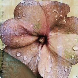 Yuri Lev - Petunia Abstract With Raindrops