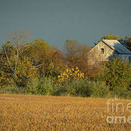 Melissa Fague - Abandoned Barn In The Trees