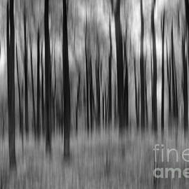 Michael Ver Sprill - Abstract Autumn BW