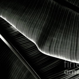 Yurix Sardinelly - Abstract banana Leaf