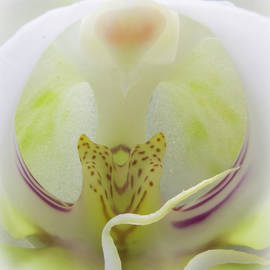 Patti Deters - Abstract Orchid
