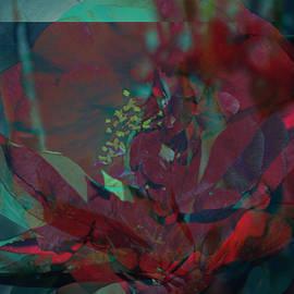 Brittney Williams - Abstract Poinsettia