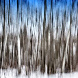 TB Sojka - Abstract Winter Forest