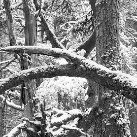 Jose Redondo - Abstract winter scene