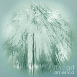 Ron Evans - Abstract Woodland