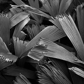Heidi Fickinger - Abundance of Palms