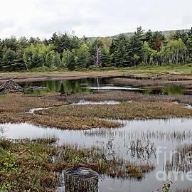 Marcia Lee Jones - Acadia Park Series