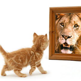 Admiring the Lion Within