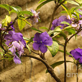 Adobe Garden Wall by Linda Shafer