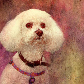 Adoration - Portrait Of A Bichon Frise  by Julia Springer