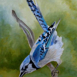 Aerialist Blue Jay by Angeles M Pomata
