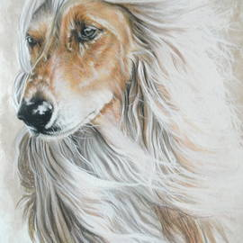 Afghan Hound In Watercolor by Barbara Keith