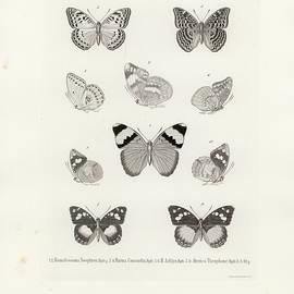 African Butterflies by W Wagenschieber