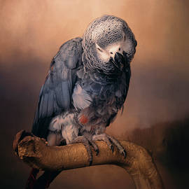 African Grey Parrot  by Maria Angelica Maira