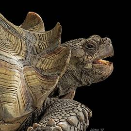 African Spurred Tortoise by Larry Linton