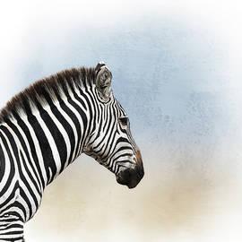 African Zebra Closeup Square - Susan Schmitz