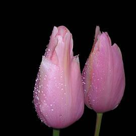 Terry Davis - After the Rain