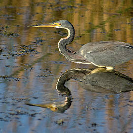 Dawn Currie - Afternoon Reflection