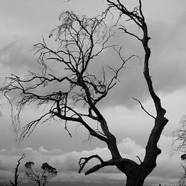 Lee Stickels - Against Sky
