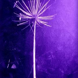 VIVA Anderson - Agapanthus Purple Glory