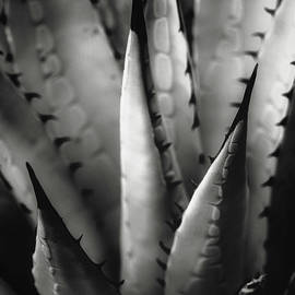 Agave and patterns by Eduard Moldoveanu