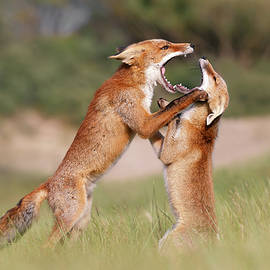 Roeselien Raimond - Agreeing to Disagree - Fox Fight
