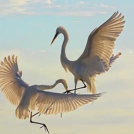 HH Photography of Florida - Air Dance
