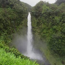 Akaka Falls, Hawaii by Maria Keady
