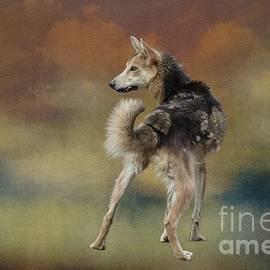 Eva Lechner - Alaskan Husky