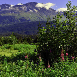 Alaskan Valley by Thomas Miles