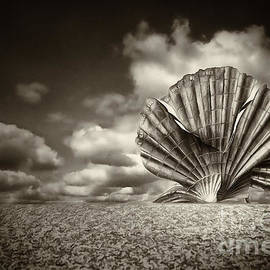 Aldeburgh Shell BW by Jack Torcello