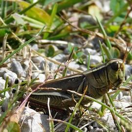 Nancy Spirakus - Aliens Among  Us Grasshopper