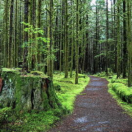 Alex Lyubar - All covered with green moss magic forest