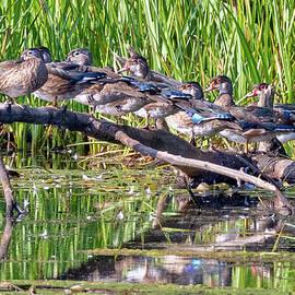 All My Ducks In A Row by Bill Wakeley