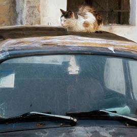Claude LeTien - Alley Cat