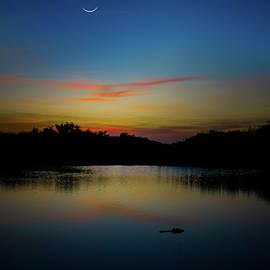 Alligator Sunset by Mark Andrew Thomas