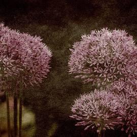 James DeFazio - Allium Hollandicum