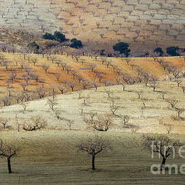 Almond Plantations by Heiko Koehrer-Wagner