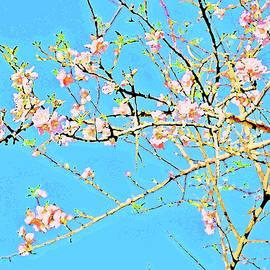 Andy Za - Almond Blossoms.