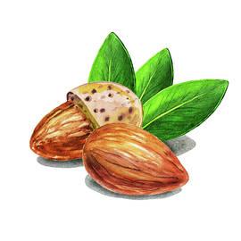 Almond Nuts Watercolor Food Illustration  - Irina Sztukowski
