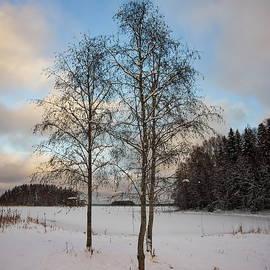 Alnus winter by Jouko Lehto