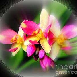 Aloha Art Orchid by Michele Hancock